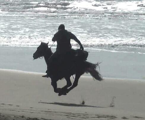 running horse on the beach
